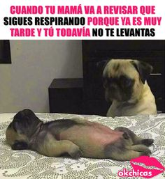Memes Estúpidos, Stupid Memes, Funny Memes, Funny Spanish Memes, Spanish Humor, A Funny, Funny Posts, Hilarious, Animal Memes