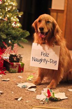 Pups at Christmas