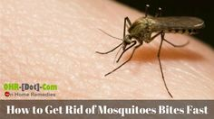 How to Get Rid of Mosquito Bites Overnight: 8 Home Remedies