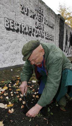 """Im November 2008 pflanzte Wargin Tulpenzwiebeln in seinem """"Parlament der Bäume"""". Mit 30.000 Blumen will er an die Toten des 2. Weltkrieges und die Maueropfer erinnern."""
