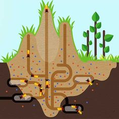 Termite Mound Cooling Systems Termites Pinterest