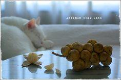ロンコン ลองกอง Longkong (Langsat) Lansium Domesticum 果物 フルーツ Fruit ผลไม้ 猫 カオマニー オッドアイ cat khaomanee oddeyes แมว ไทย ขาวมณี アンティークタイキャット