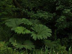 Aberglasney gardens (South Wales) · bbaines