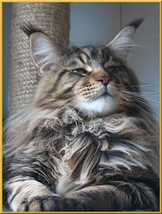 Lordly cat...