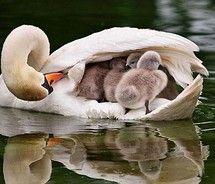 Doting mother.