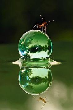 ボク、水滴の上にだって乗れるよ!V(^_^)V