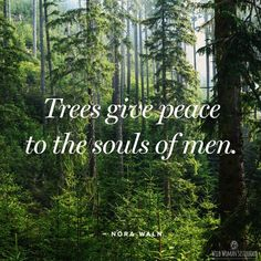 Trees help calm us by lowering our vibration. Next time u r feeling frazzled, stressed or anxious, take a stroll in nature or sit under a tree for 10 minutes & feel the difference.