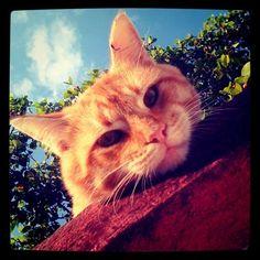El Gato-güero