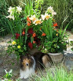 12 tips for gardening with dogs | Living the Country Life