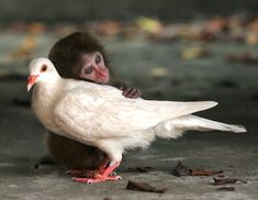 """""""Conditional love wants our differences to disappear. Unconditional love finds harmony in our differences."""" -Cathy Eck"""