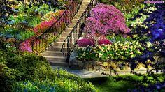 Schody, Kwiaty, Ogród