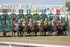 horse starting gate for entry