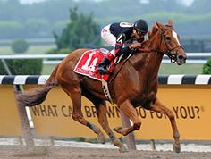Ginger Punch(2003)Awesome Again- Nappelon By Bold Revenue. 5x5 To Raise A Native. 22 Starts 12 Wins 6 Seconds 2 Thirds. $3,065,623. Won 2007 BC Distaff (G1), Ruffian H(G1) Go For Wand(G1)Twice In 2007 And 2008, 2008 Ogden Phipps H(G1), Personal Ensign H(G1). Retired And Sold To Japan In 2009.