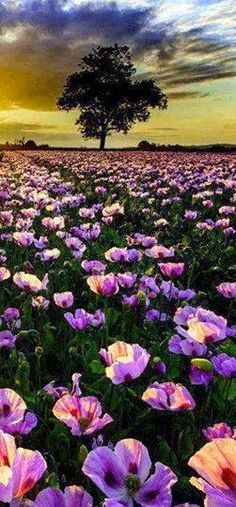 # Landscape and flower #