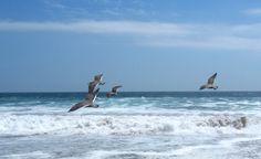 Playa Brava, Iquique, Chile. Cámara Canon Power Shot SD550 modo manual.