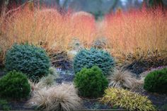 Winter colour and texture from Fine Foliage. Outdoor Garden, Colorful Landscape, Winter Garden, Plants, Garden, Landscape Design, Garden Decor, Garden Plants, Landscaping Plants