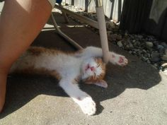 These pets are power nap experts (29 Photos)