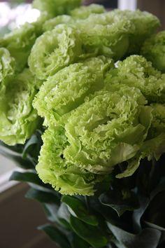 eustoma Fringe lime green
