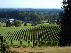 Newberg-Dundee area of Oregon - Red Hills area wineries. <3