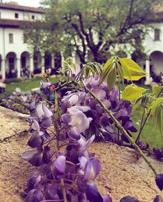 """""""Mi piace"""": 94, commenti: 4 - Moving Culture Brescia (@movingculturebrescia) su Instagram: """"Buona serata igers con lo scatto primaverile di @valenta9029  ___________ #brescia…"""""""