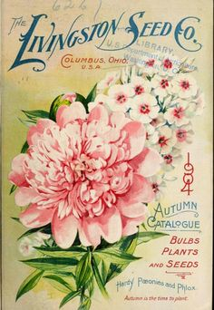 Livingston Seed Co,   1904 Autumn catalogue with an illustration of Hardy Paeonies