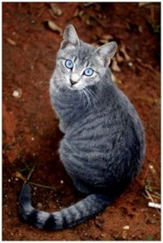 Why Tabitha, you've gotten contacts!  So now you are a 'blue-eyed tabby'.  Aww,  I still miss you anyway!