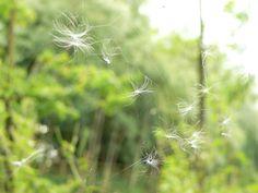 "https://flic.kr/p/czMQCf | P1570173c  ""A Breath of Green Wind"" | Web of Life ... and Death."
