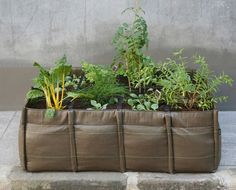 Garden on the go: Bacsac portable sac garden, you can place this wherever you like. Great for growing your own greens on terrace or balcony.