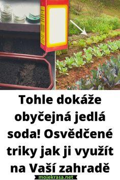 Crock Pot, Garden, Garten, Slow Cooker, Lawn And Garden, Crockpot, Gardens, Gardening, Crock