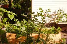 tuulinenpaiva.fi My garden in june.
