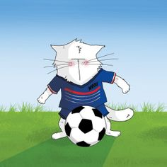 chat footballeur / cat and football