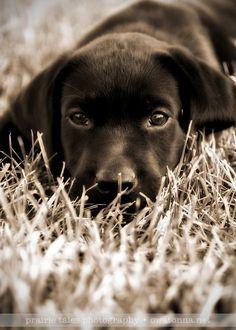 lindo cachorrito se parecea mi bebe