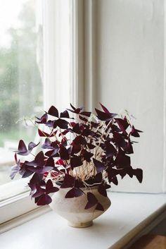 ¿Te gusta el color morado? Con estas 15 magníficas plantas de interior de color morado tendrás material suficiente para decorar tu casa con este color tan de moda. O simplemente para aumentar tu co…