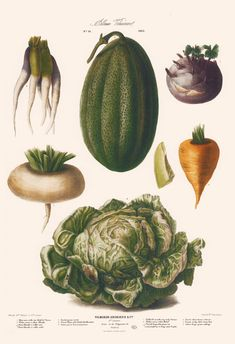 Sale Vintage Paris Botanical Vegetable Print on Heavy paper Illustration Botanique, Botanical Illustration, Kitchen Prints, Kitchen Wall Art, Nature Prints, Art Prints, Vegetable Illustration, Vegetable Prints, Vintage Paris