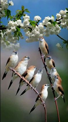 Most Popular Photography Nature Animals Pretty Birds Ideas Pretty Birds, Love Birds, Beautiful Birds, Animals Beautiful, Nature Animals, Animals And Pets, Cute Animals, Small Birds, Colorful Birds