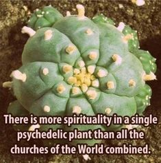 There is more spirituality in a single psychedelic plant than all the churches of the World combined. Growing Mushrooms At Home, Sacred Plant, Illustration Blume, Wild Edibles, Medicinal Plants, Diy For Girls, Cool Posters, Frames On Wall, Flower Prints
