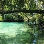 three sisters springs Crystal River Florida, Three Sisters, Tour Tickets, Online Tickets, Trip Advisor, Road Trip, To Go, Heaven, Places