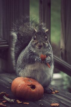 What all the pumpkins look like around my neighborhood. Stoked lil' squirrels every where ❤