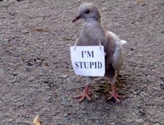 I'm stupid. At times. Im Stupid, Stupid Memes, Dankest Memes, Funny Memes, Funny Fails, Funny Shit, Hilarious, Chelsea Handler, Gavin Memes