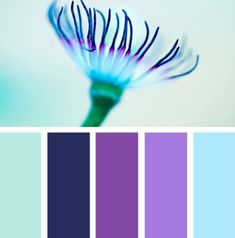 Design Seeds' Palette Search- pick a color and search. Finds matches from photo palettes. Here, clematis tones.-- the navy and lighter blue Purple Color Palettes, Colour Pallette, Colour Schemes, Color Combos, Purple Palette, Design Seeds, Turquoise And Purple, Purple Lilac, Purple Bed