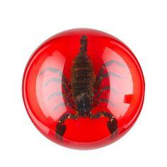 REAL Centipede in Acrylic Block-Taxidermy-Halloween Decor-Small SHIPS FREE