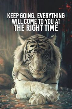 Those with the tiger spirit often have a will power and passion for life that is unrevaled. People with the tiger spirit tend to be confident, loving and wise. Beautiful Cats, Animals Beautiful, Beautiful Pictures, Animals And Pets, Cute Animals, Animals Photos, Fierce Animals, Baby Animals, Big Cats