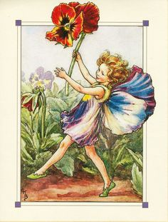 pansy fairie