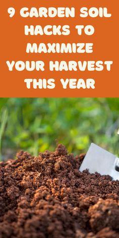 Garden Yard Ideas, Veg Garden, Vegetable Garden Design, Garden Soil, Garden Care, Water Garden, Home Grown Vegetables, Organic Vegetables, Growing Vegetables