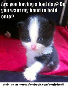 You Can Hold My Paw....