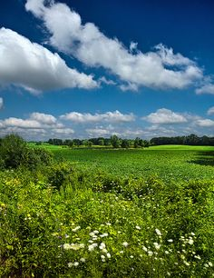 Meadow Song by Phil~Koch, via Flickr