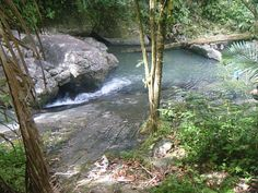 El Yunca, Puerto Rico. Rain forest- stop on our cruise. the rainforest was super cool.