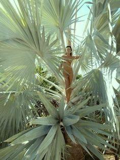 Incredible plant