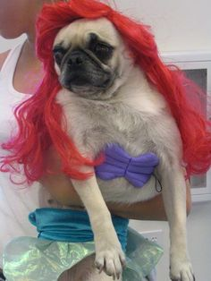 Sea pug!! http://andsapphiretoo.lilyandmay.co.uk/wp-content/uploads/2013/08/link-number-4.jpg