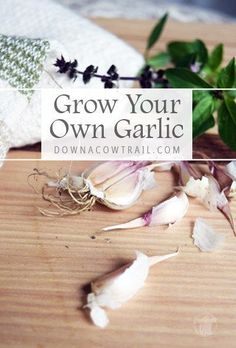 Garden Design For Kids How to grow your own garlic from cloves right in your backyard! Here are some tips for growing an abundance of garlic at home! Gardening Gloves, Gardening Tips, Vegetable Gardening, Sustainable Gardening, Organic Gardening, Urban Garden Design, Small Garden Design, Raised Garden Beds, Raised Beds